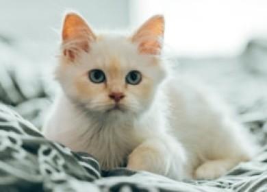 К чему нужно готовиться, обнаружив у кошки липидоз печени?