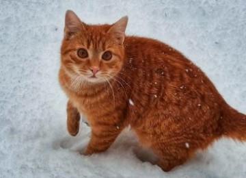 Достоверная информация о том, можно ли кефир кошкам и котам!
