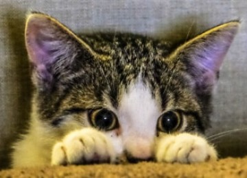 Безопасен ли Энросепт для кошек и как его использовать?