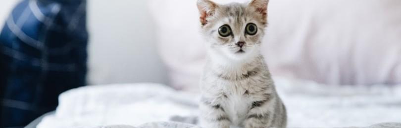 Подробно про ушные капли Ципам для кошек