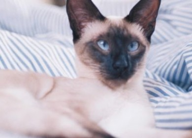 Почему возникает косоглазие у кошек и пройдет ли оно?