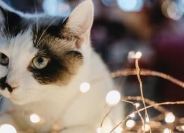 Как работает Диаркан для кошек и зачем он нужен?
