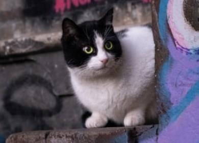 Если вы подозреваете, что у кошки гепатоз — незамедлительно действуйте!